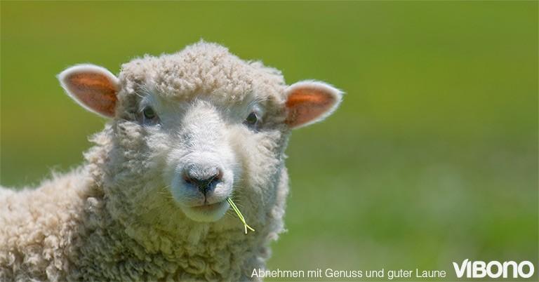 Ballaststoffe - oder was uns Menschen von Schafen unterscheidet
