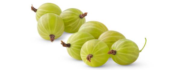 Saure Beeren – Das Belohnungssystem (1)