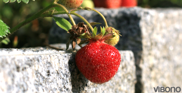 Hurra, es ist Erdbeerzeit!