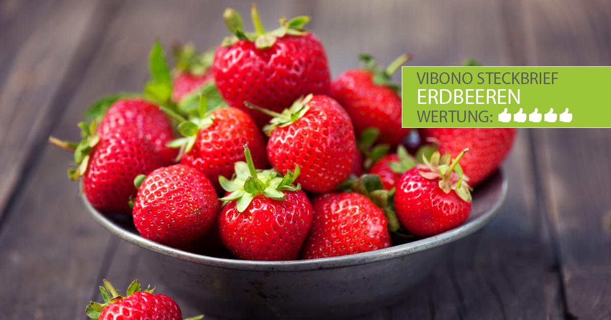Erdbeeren-Steckbrief