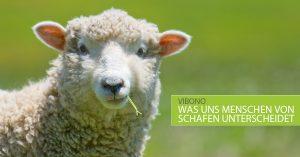 Ballaststoffe – oder was uns Menschen von Schafen unterscheidet